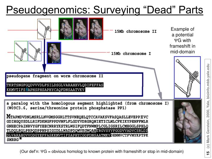 Pseudogenomics: Surveying