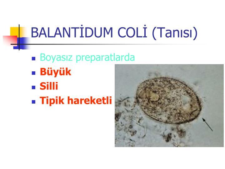 BALANTİDUM COLİ (Tanısı)