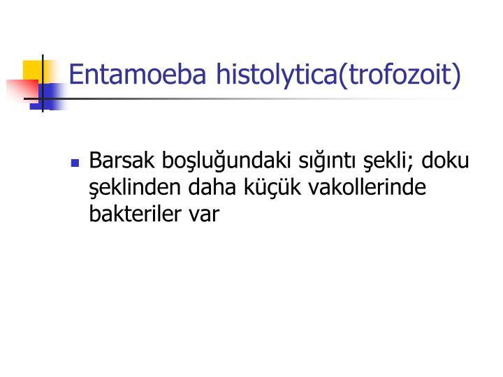 Entamoeba histolytica(trofozoit)