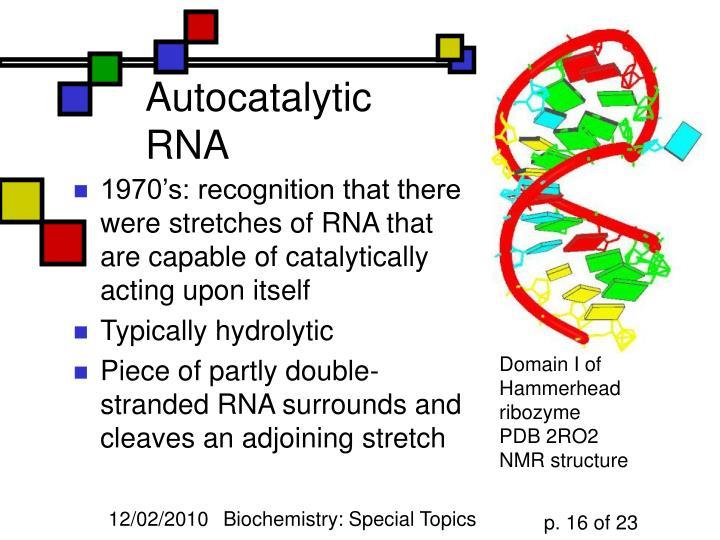 Autocatalytic RNA