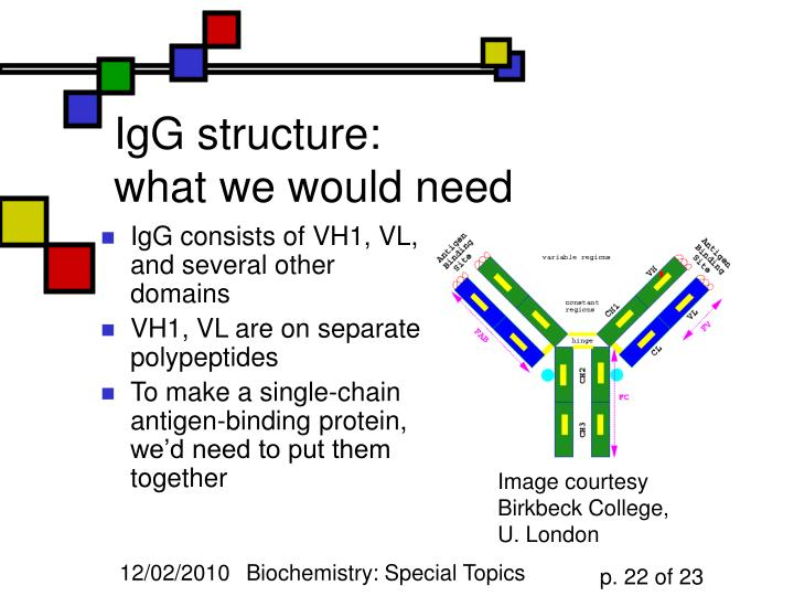 IgG structure: