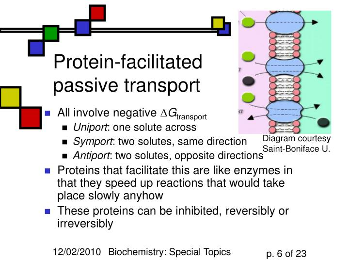 Protein-facilitated passive transport