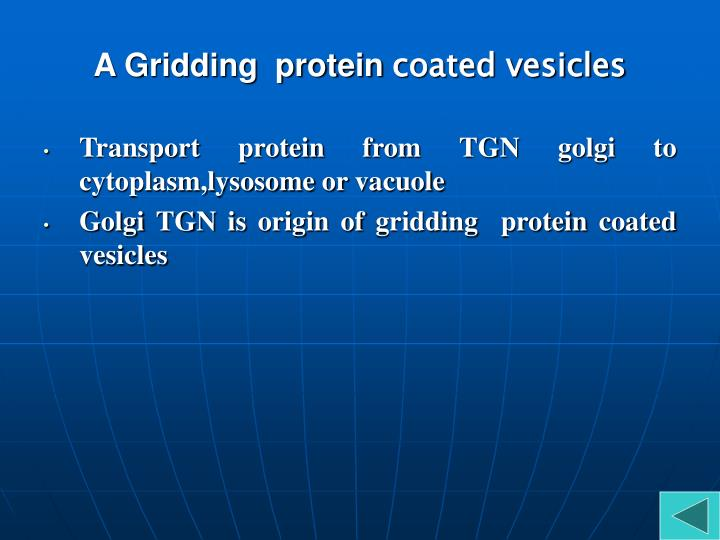 A Gridding  protein