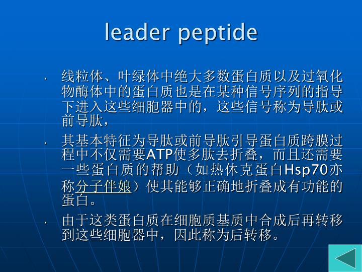 leader peptide