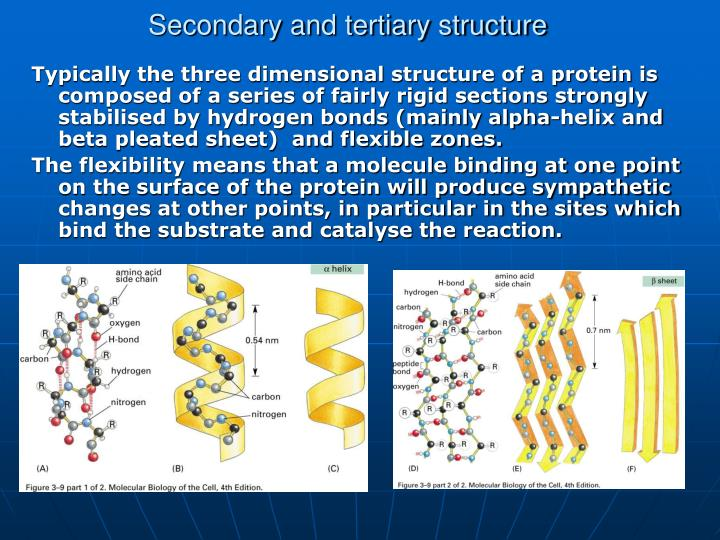 Secondary and tertiary structure