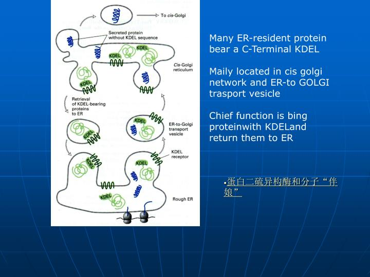 Many ER-resident protein bear a C-Terminal KDEL