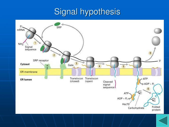 Signal hypothesis