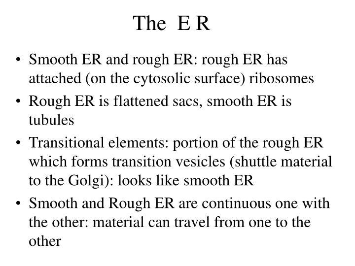 The  E R