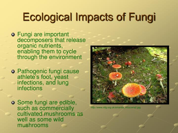 Ecological Impacts of Fungi