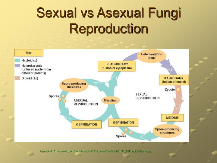 Sexual vs Asexual Fungi Reproduction