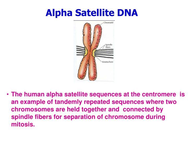 Alpha Satellite DNA