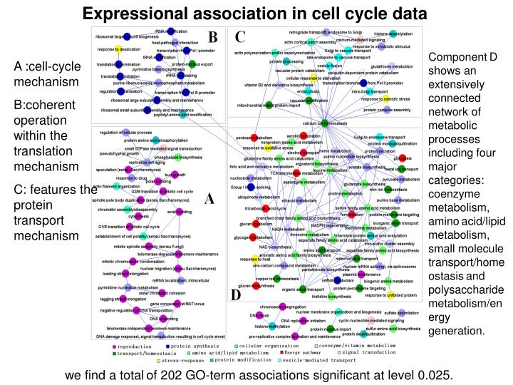 Expressional association in cell cycle data