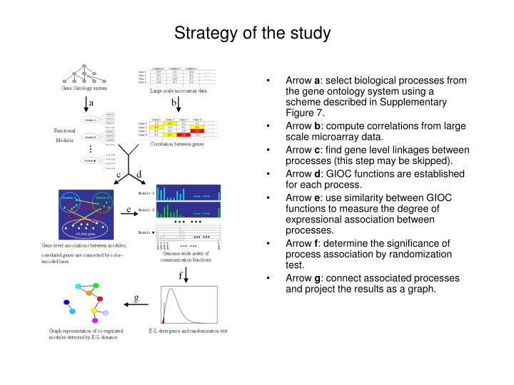 Strategy of the study