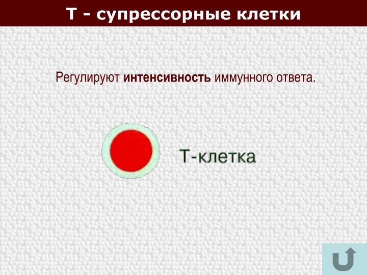 Т - супрессорные клетки