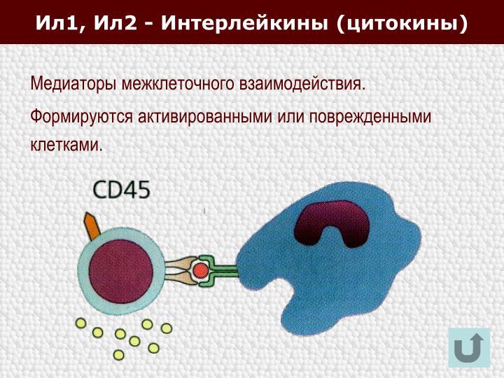 Ил1, Ил2 - Интерлейкины (цитокины)