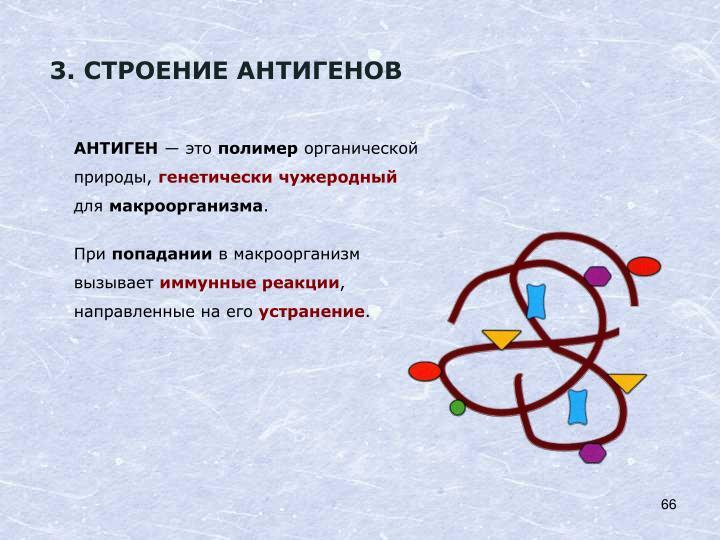 3. СТРОЕНИЕ АНТИГЕНОВ