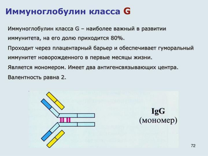 Иммуноглобулин класса