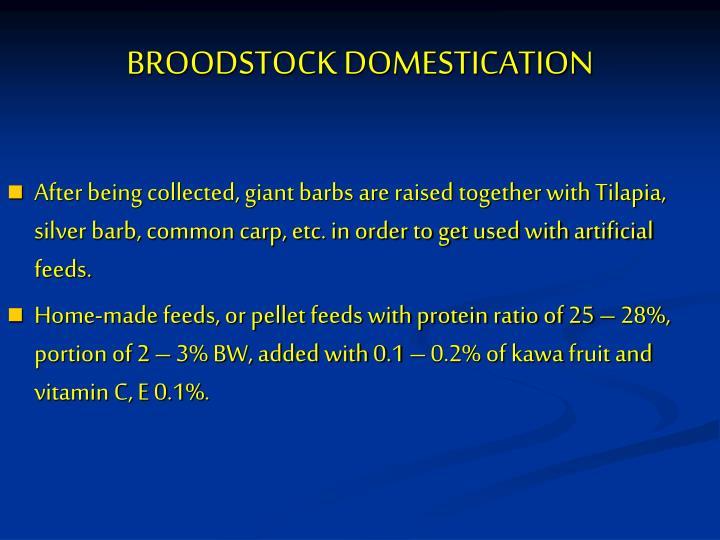 BROODSTOCK DOMESTICATION