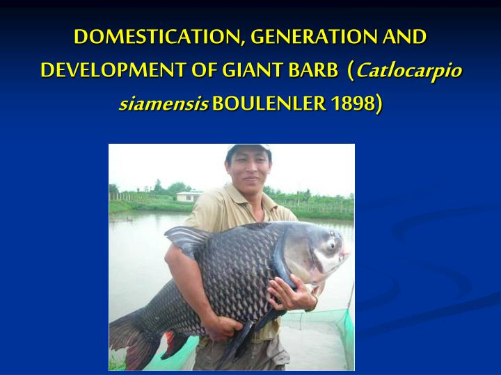 DOMESTICATION, GENERATION AND DEVELOPMENT OF GIANT BARB  (