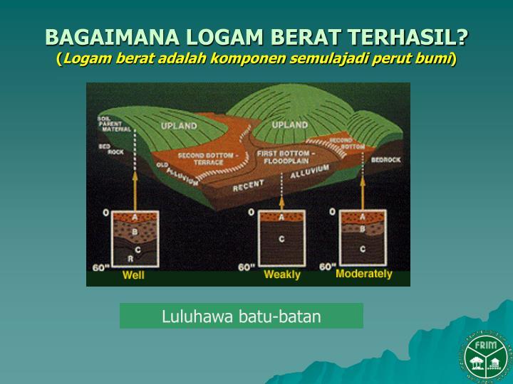 Toksisitas Timbal Dalam Tubuh Manusia dan Lingkungan