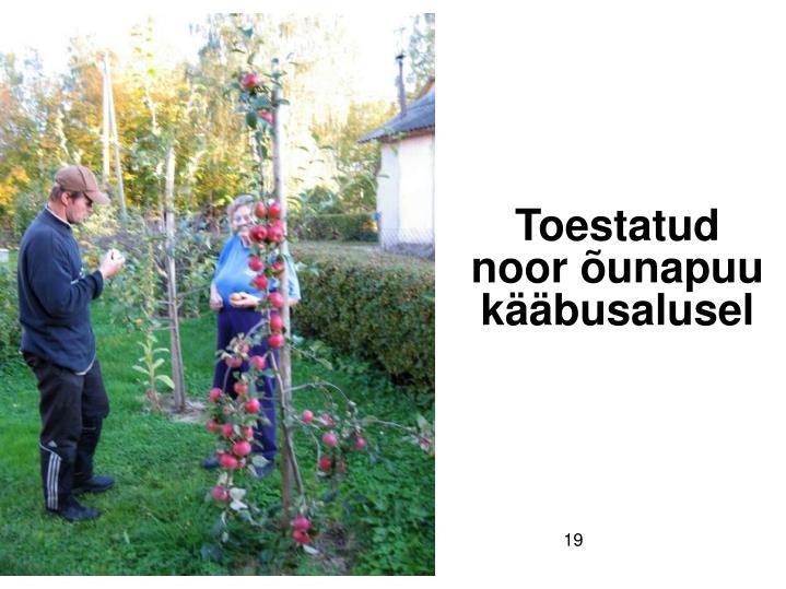 Toestatud noor õunapuu kääbusalusel