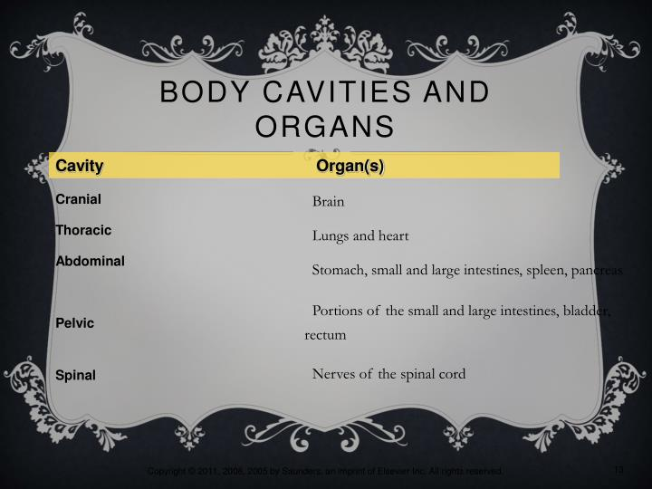Body Cavities and Organs