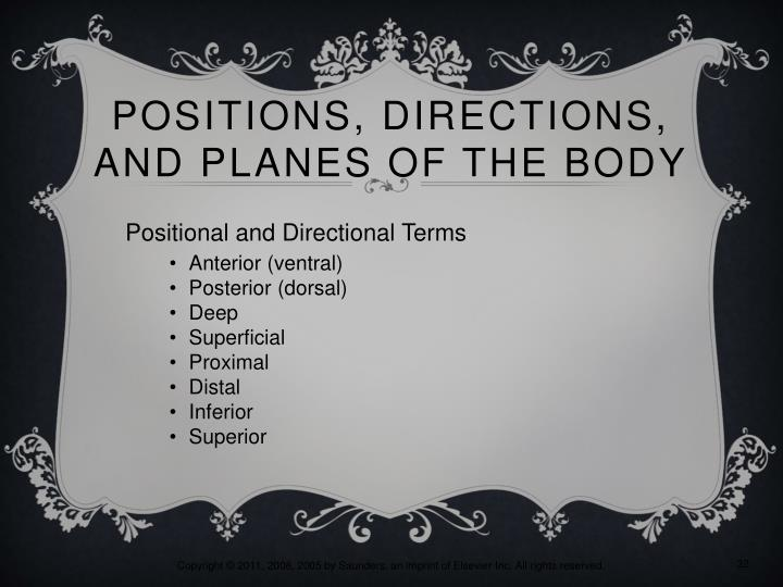 Positions, Directions, and Planes of the Body