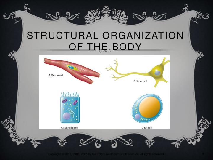 Structural Organization of the