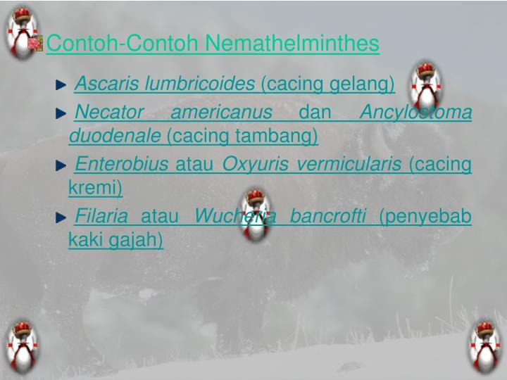 Contoh-Contoh Nemathelminthes