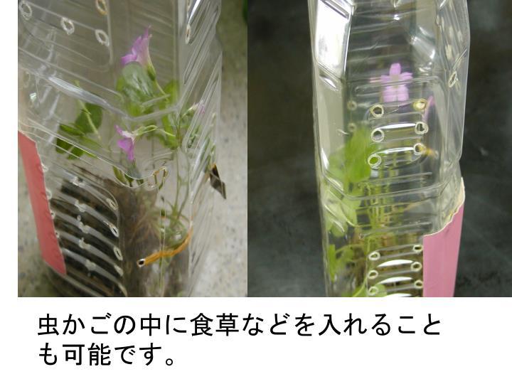 虫かごの中に食草などを入れることも可能です。