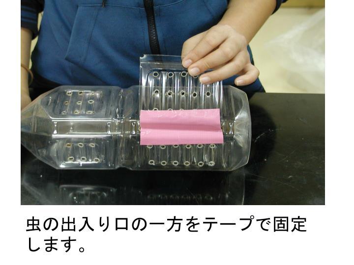 虫の出入り口の一方をテープで固定します。