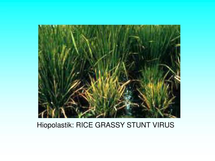 Hiopolastik: RICE GRASSY STUNT VIRUS
