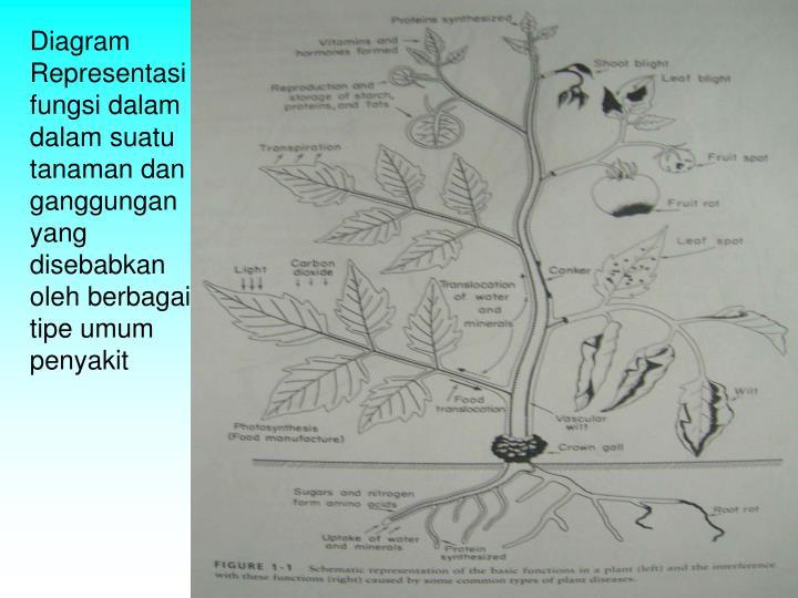 Diagram Representasi fungsi dalam dalam suatu tanaman dan ganggungan yang disebabkan oleh berbagai tipe umum penyakit