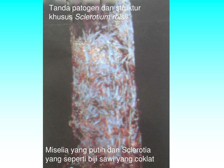 Tanda patogen dan struktur khusus