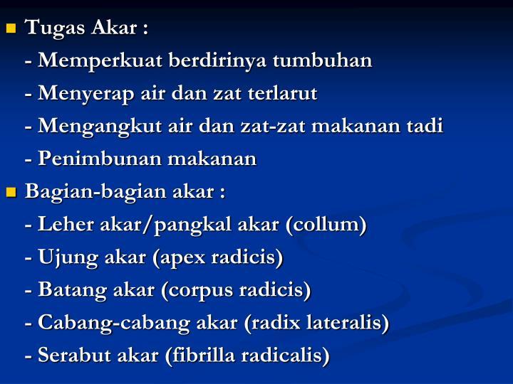 Tugas Akar :
