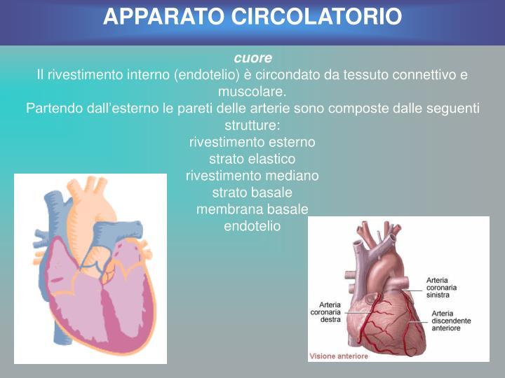 APPARATO CIRCOLATORIO