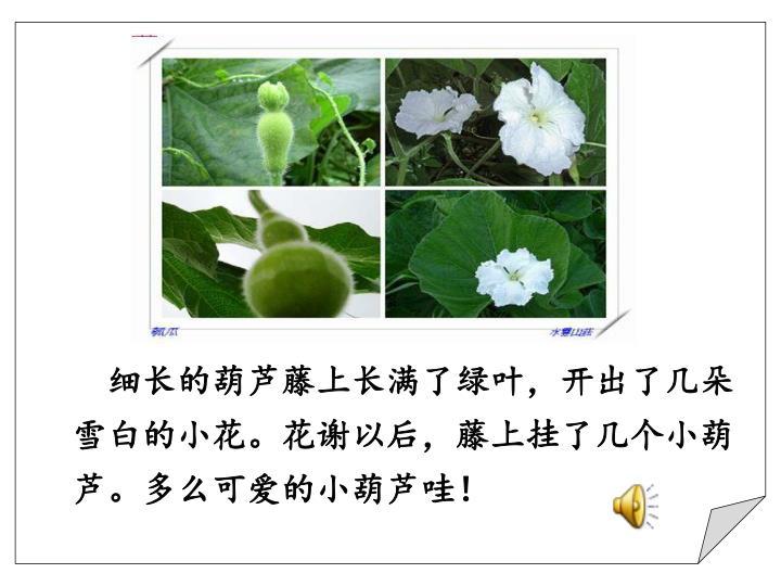 细长的葫芦藤上长满了绿叶,开出了几朵雪白的小花。花谢以后,藤上挂了几个小葫芦。多么可爱的小葫芦哇!