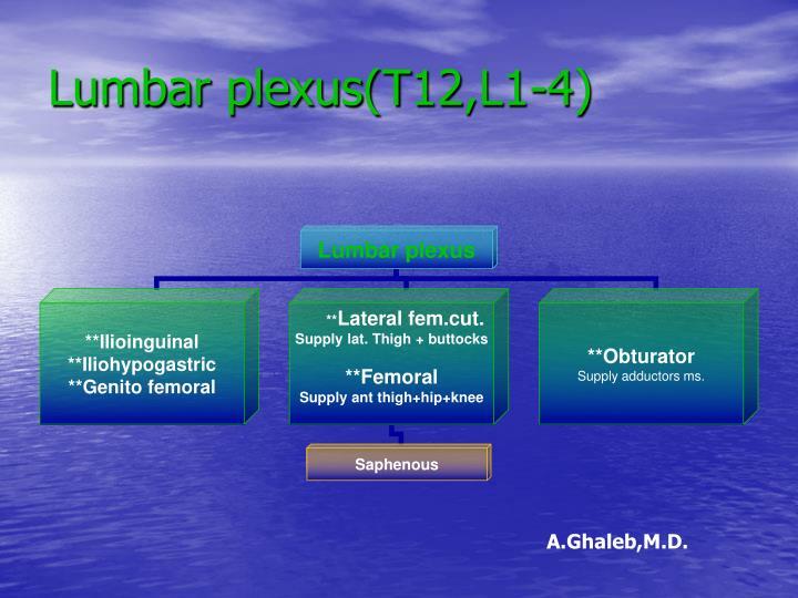 Lumbar plexus(T12,L1-4)