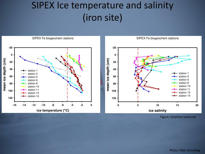 SIPEX Ice temperature and salinity