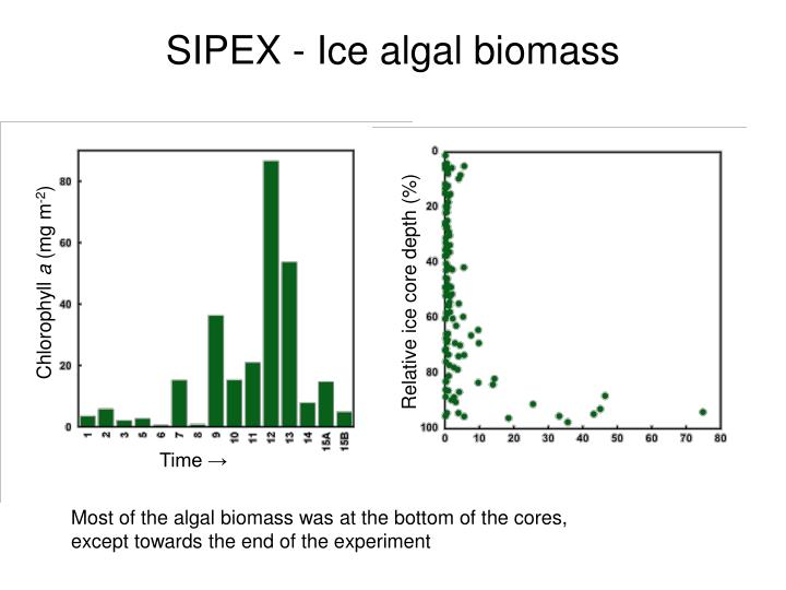 SIPEX - Ice algal biomass