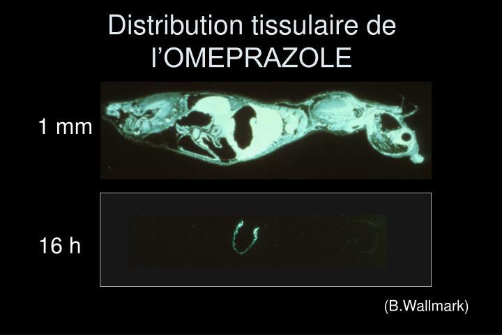 Distribution tissulaire de l'OMEPRAZOLE