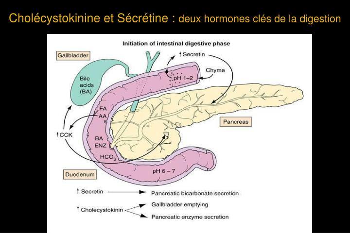 Cholécystokinine et Sécrétine :