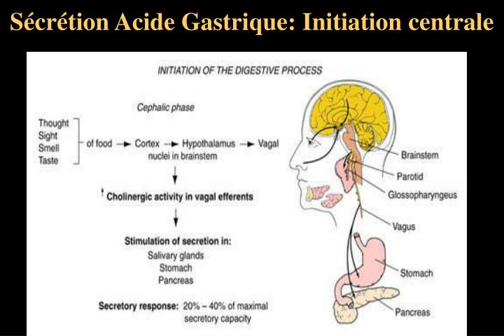 Sécrétion Acide Gastrique: Initiation centrale