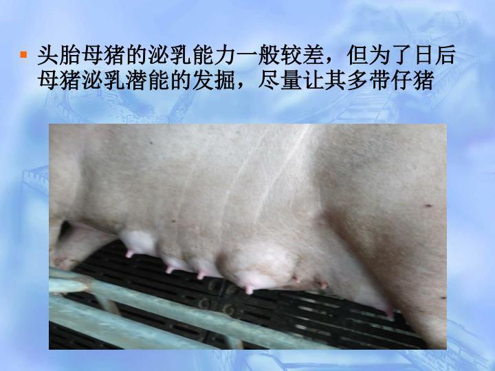 头胎母猪的泌乳能力一般较差,但为了日后母猪泌乳潜能的发掘,尽量让其多带仔猪