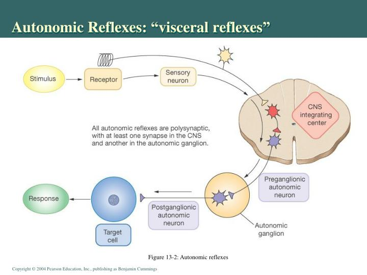 "Autonomic Reflexes: ""visceral reflexes"""