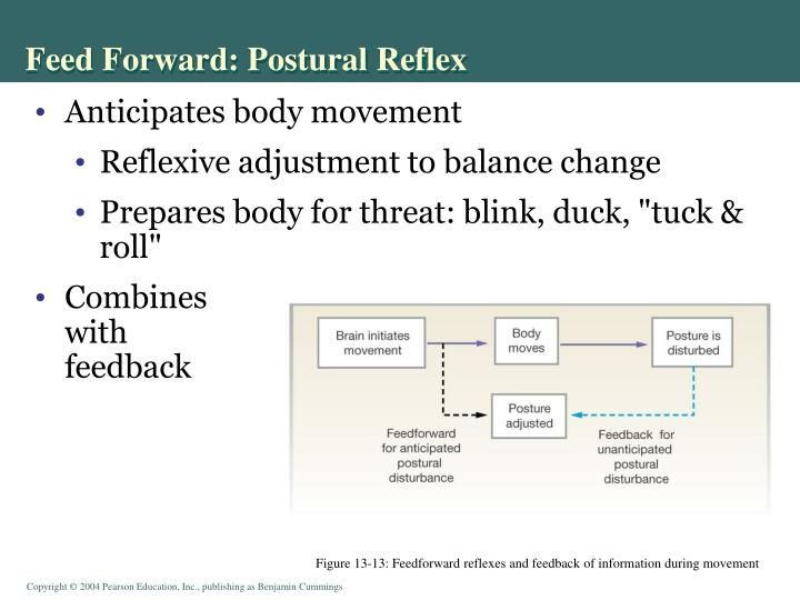 Feed Forward: Postural Reflex