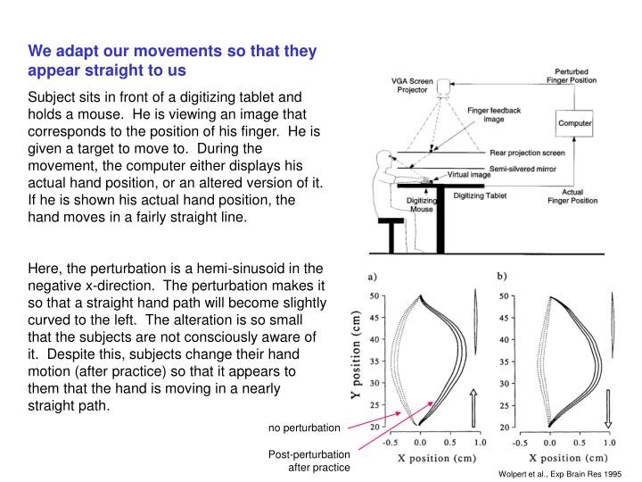 We adapt our movements so that they appear straight to us