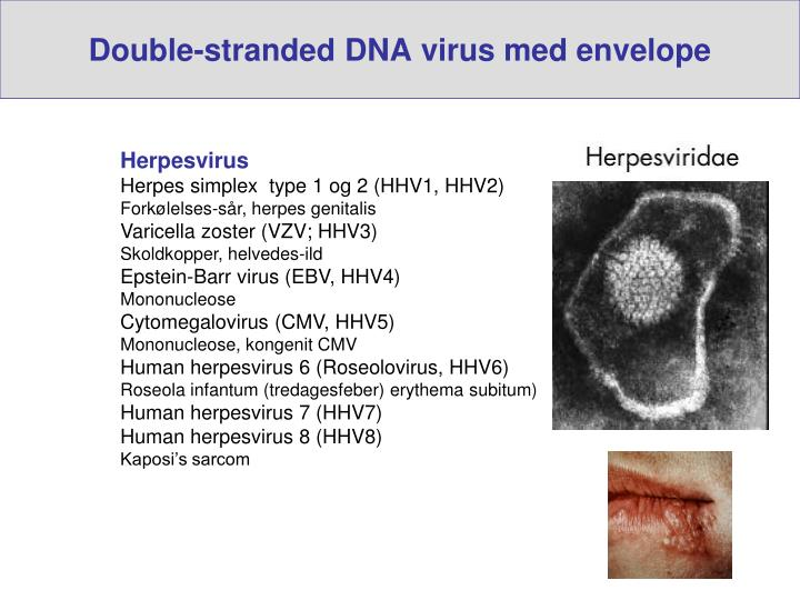 Double-stranded DNA virus med envelope