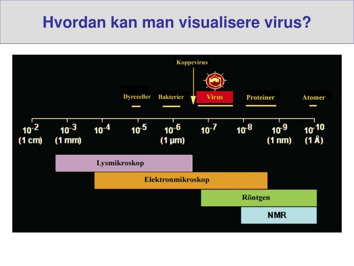 Hvordan kan man visualisere virus?
