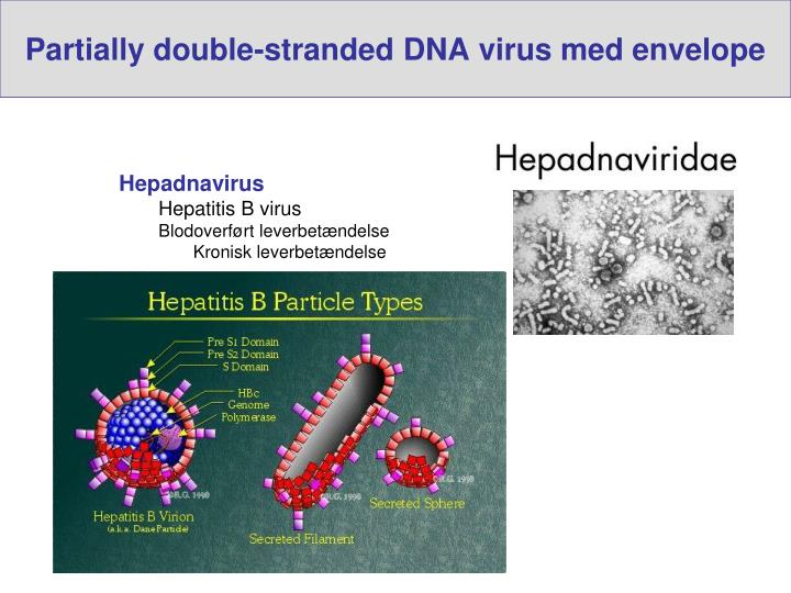 Partially double-stranded DNA virus med envelope